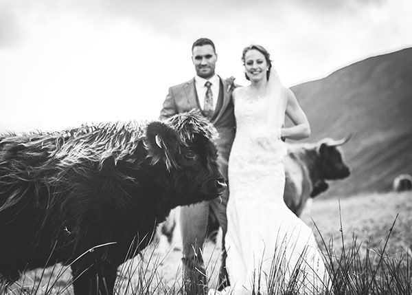 Highland Cow at elopement