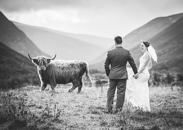 Highland Cow with married couple